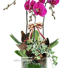 Orchid Design-Hundred blessings, Alice Florist Taipei Taiwan.