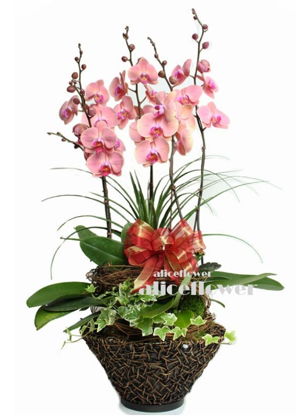 Autumn Flowers,Birthday Celebration Orchid
