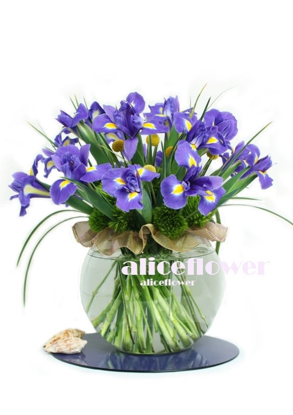 Spring Bouquets in Vase,Blue Aliceflowers in the Glass
