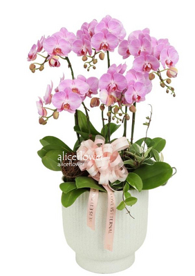 Autumn Flowers,Beauty Orchid