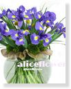 Spring Bouquets in Vase,Blue Aliceflowers in the Glass bottles FV050