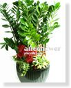 Opening potted plants,Congratulations Plant