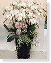 Funeral Orchids Designed,White moon butterfly orchid