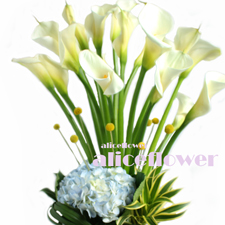 Spring Festivals Flora-Pure Lover Calla Lily,The off white calla lily is a seaosnal flowers and people just love it. Alice Florist Taipei.