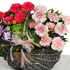 Mother´s Day Arranged Flowers- Happy Flower-Alice Florist Taipei.