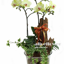 Thanksgiving Flowers and Gifts - 