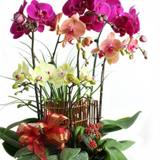 Father's Day Orchid-Vase-Fun Colors Orchid